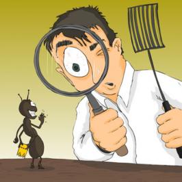 شركة مكافحة حشرات ببريدة 0551009561 شركة الشهيد